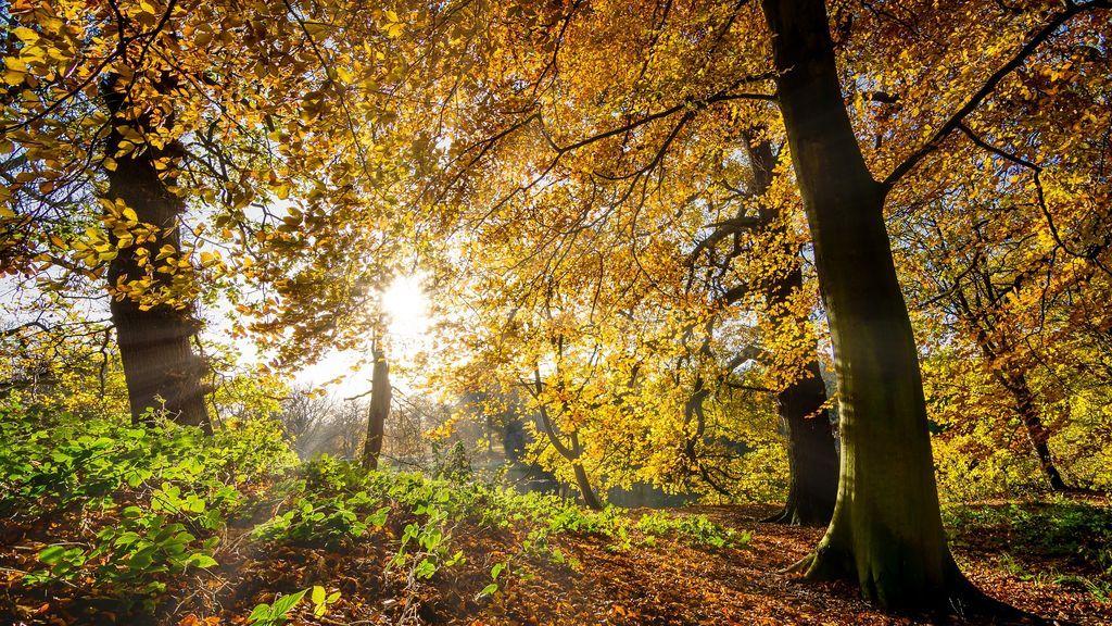 autumn-leaves-2963223_1920