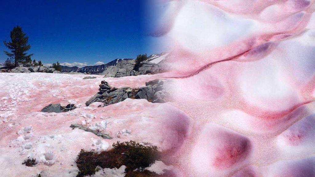 No es un efecto óptico: la nieve rosa existe, y es lo más instagrammeable de las montañas