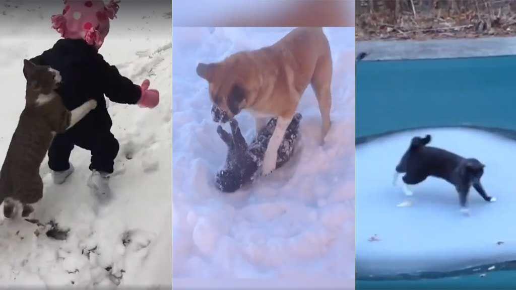 Gatos + nieve = los mejores vídeos con los que partirte de risa estas navidades