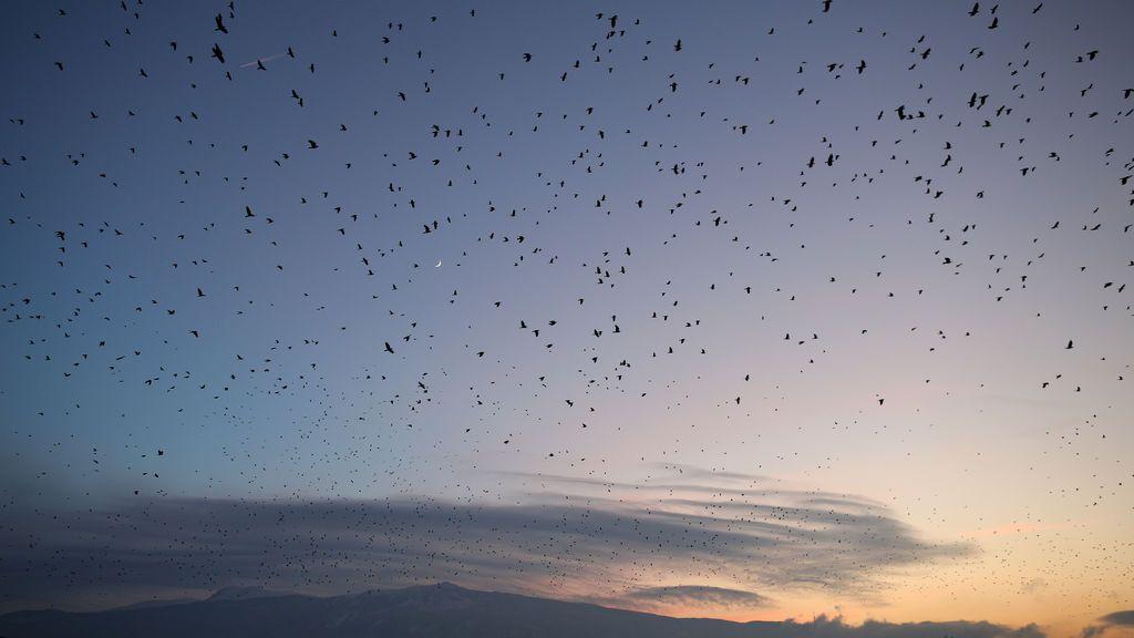 Una gran bandada de pájaros vuela sobre la ciudad de Sofía