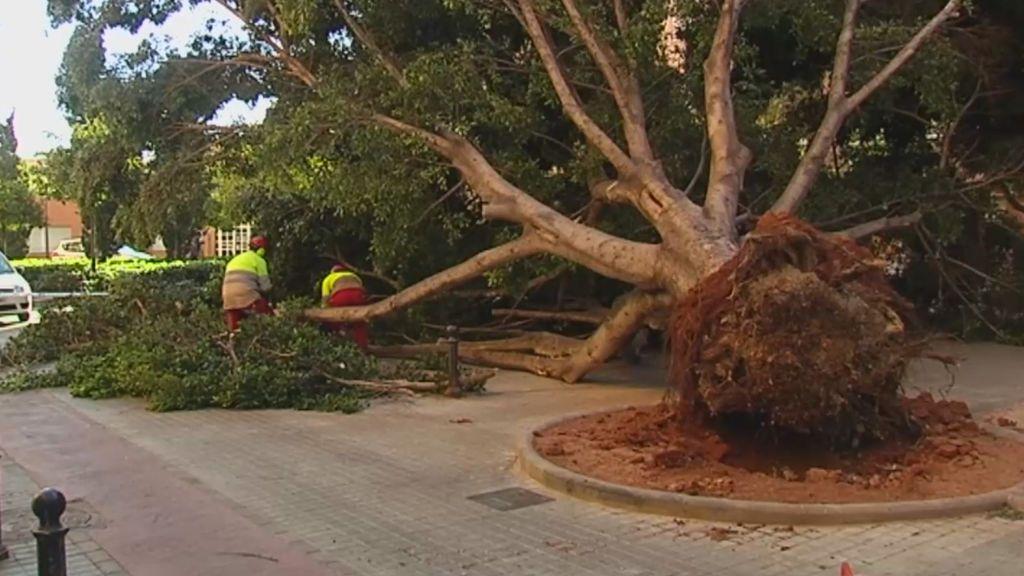 Las fuertes rachas de viento se cobran la vida de un hombre en Tarragona