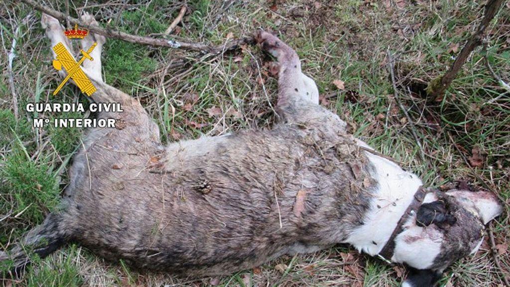Investigan a un hombre por matar a su perro de un golpe en el cráneo y tirarlo en un monte burgalés