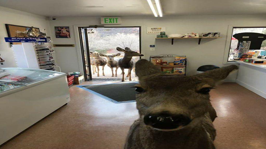 Le dio una barrita de cereales a un ciervo y volvió a por más con sus hijos