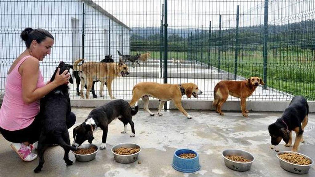 Refugio-Municipal-de-Animales-Tana