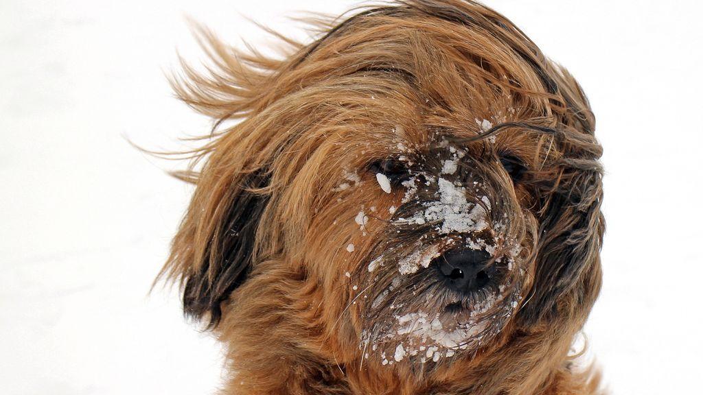 ¿En qué momento hace demasiado frío como para sacar al perro a pasear?