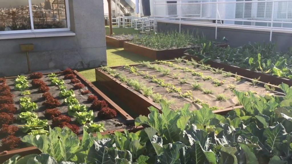 Roof Garden Azotea Plantas