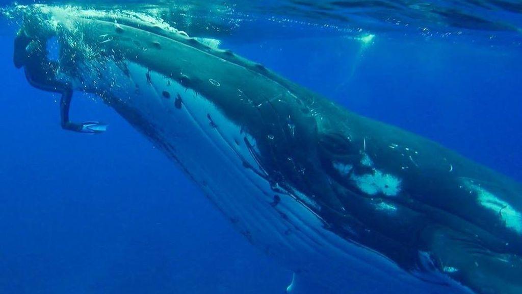 La impresionante imagen que muestra cómo una ballena salva a una mujer de un tiburón