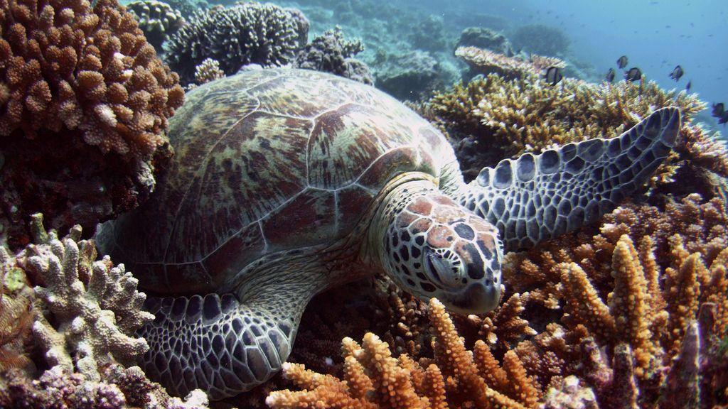 Científicos advierten que las tortugas macho se están convirtiendo en hembras por el cambio climático