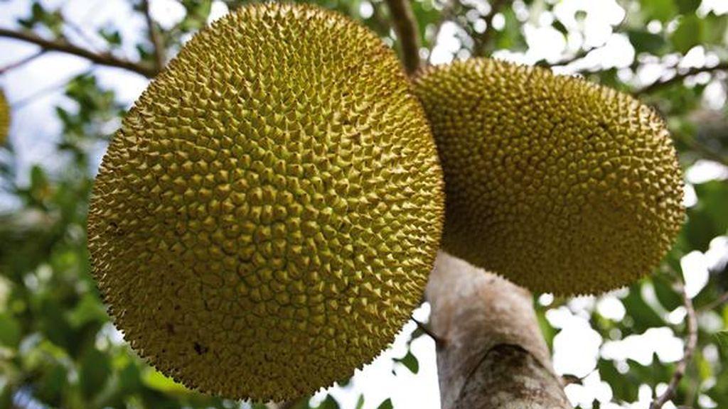 Jackfruit: la superheroína que es una fruta y que salvará al mundo del hambre
