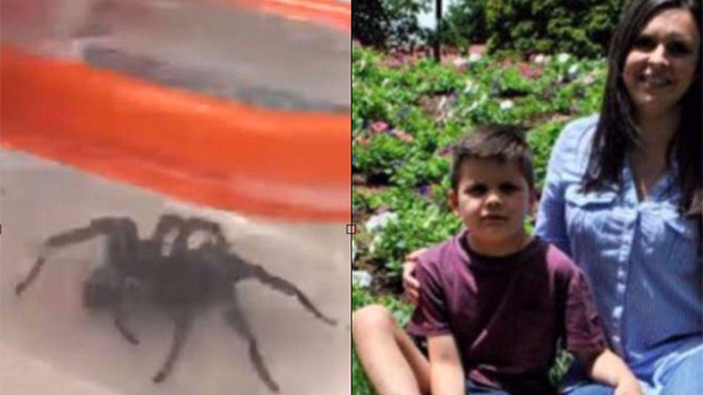 Araña y niño