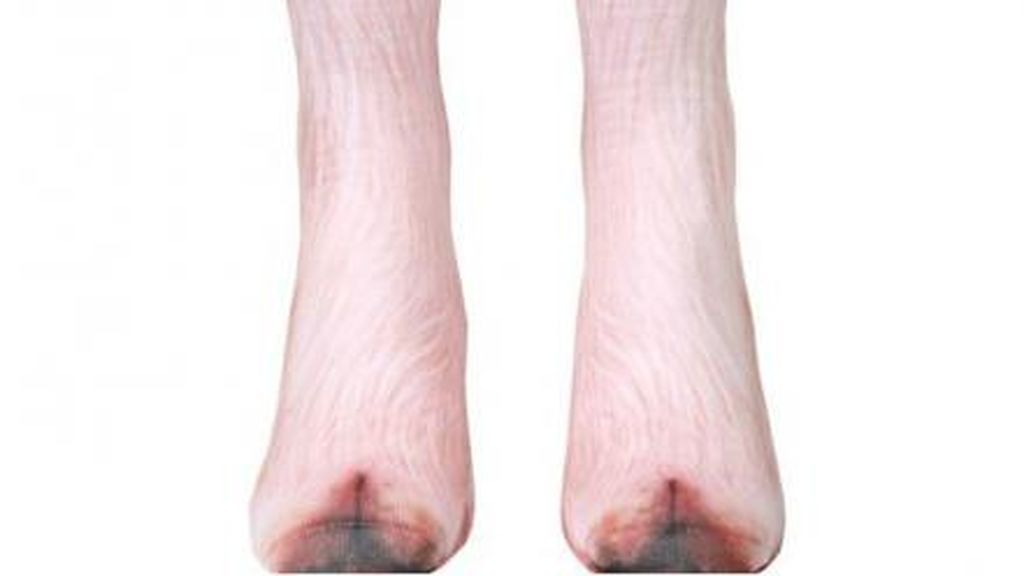 Calcetines de cerdo