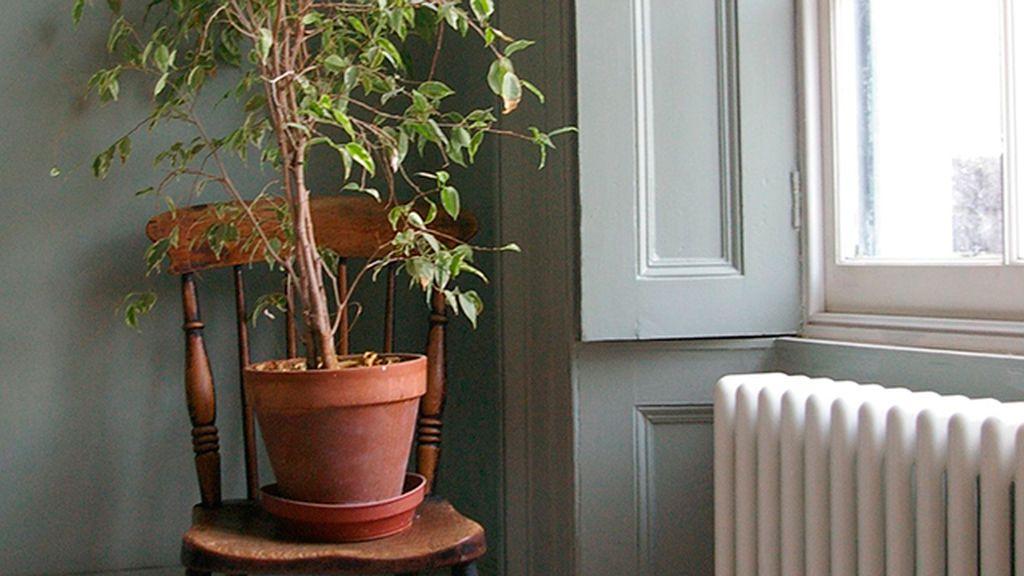 plantas y calefacción