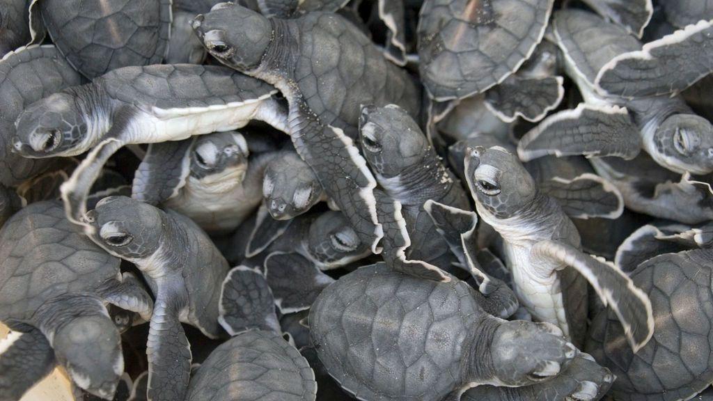 Ya eran multitud: ¿qué va a pasar con las tortuguitas abandonadas de Atocha?