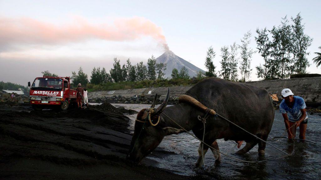 Un residente y su búfalo de agua caminan por un río, mientras que el volcán Mayon arroja ceniza en Guniobatan, provincia de Albay, Filipinas