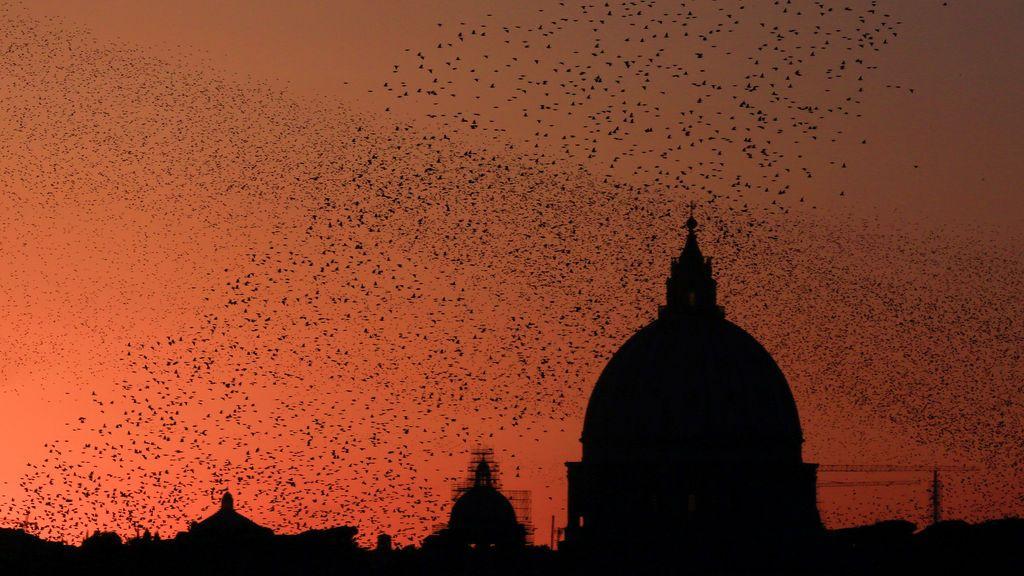 Una bandada de estorninos vuela al atardecer en Roma, Italia.