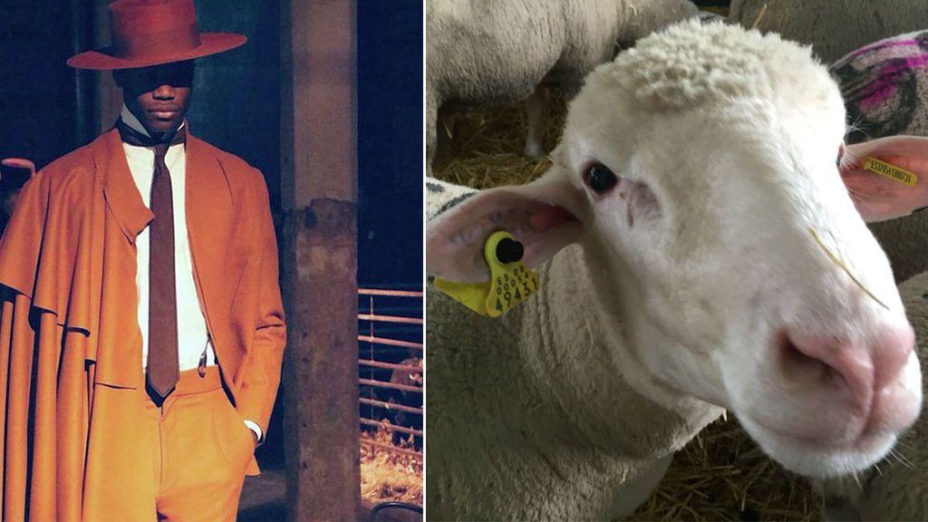 Oteyza inaugura la Fashion Week Madrid con ¡50 ovejas merinas en el 'frontrow' en lugar de famosos!