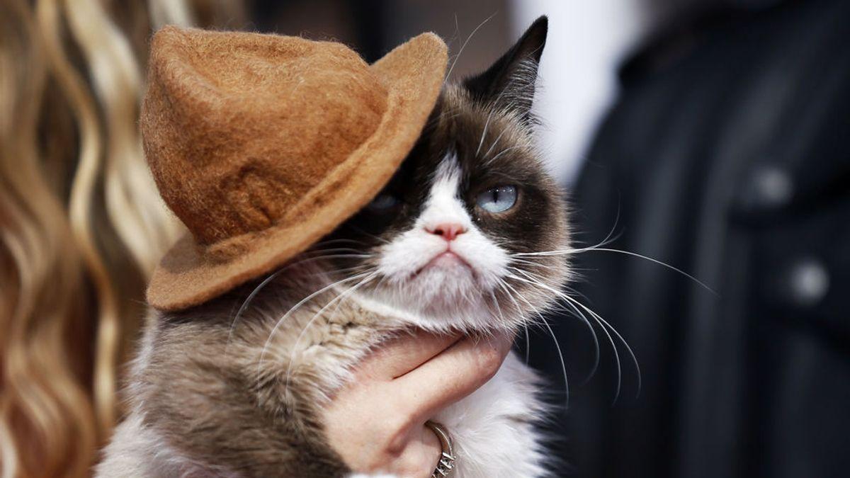 La 'gata gruñona' recibe una cuantiosa indemnización por sus derechos de imagen