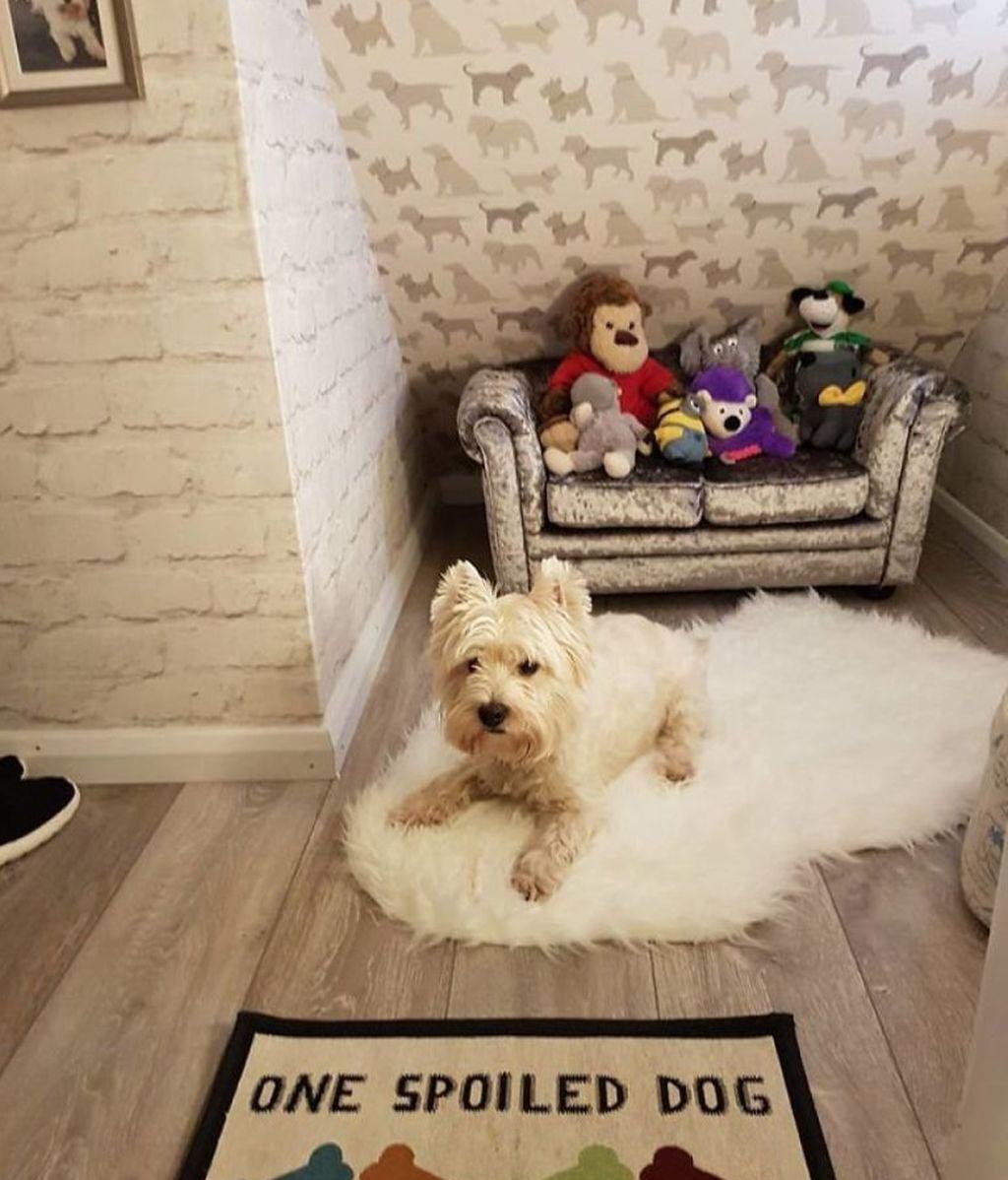 Le hace una habitación a su perro para que se sienta como uno más de la familia tras nacer su hijo