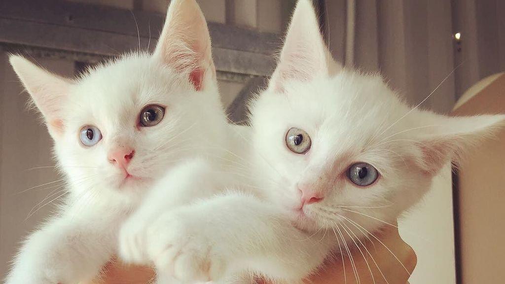 Una clínica veterinaria te paga dinero por amar a sus gatitos