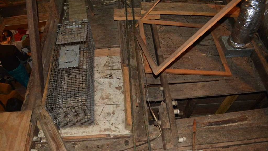 Descubren el cadáver de la anterior propietaria de su casa entre las paredes