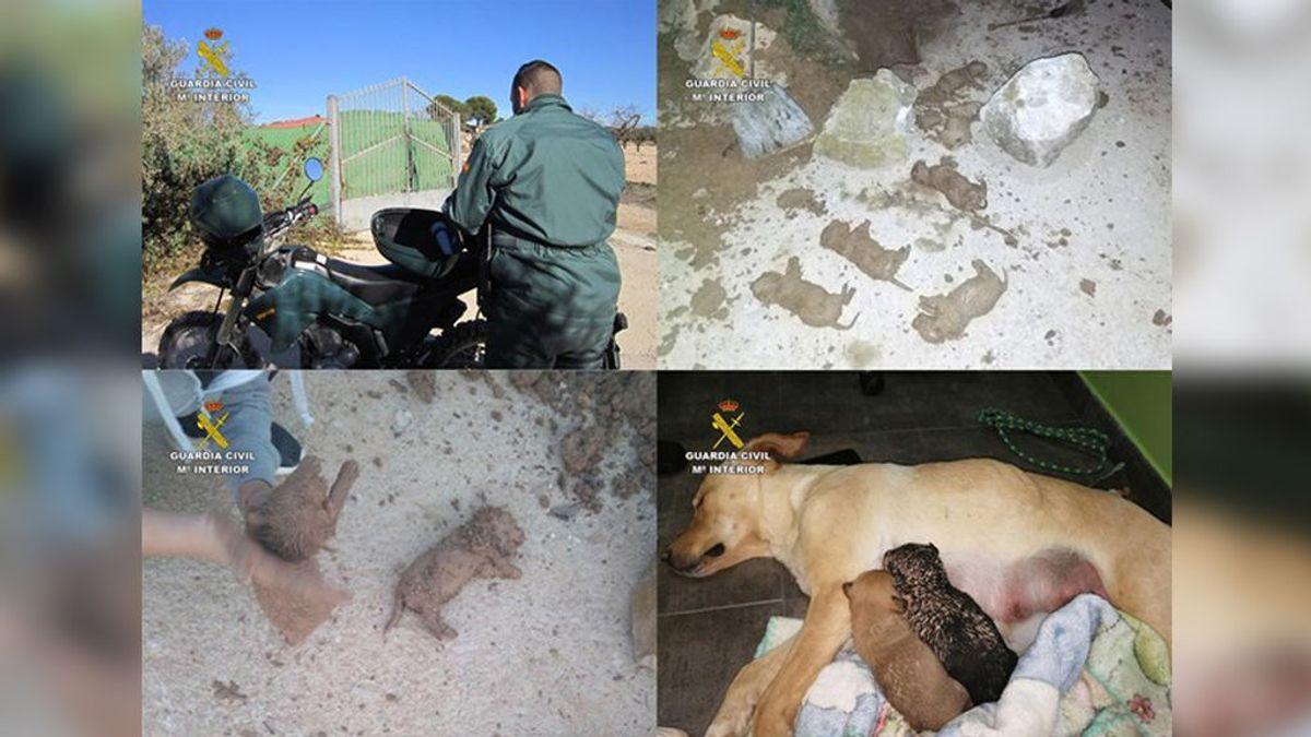 Tres personas sepultan vivos a nueve cachorros de una camada en una finca de Murcia