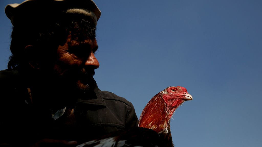 Sosteniendo a un gallo en Kabul