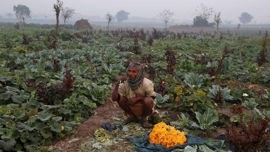 Un agricultor se cepilla los dientes con una ramita de neem en su campo de vegetales en Kolkata, India