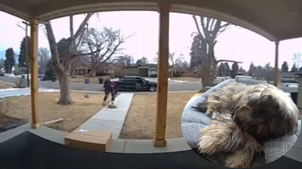 Graban cómo les roban a su cachorro de Shih Tzu de la entrada de su casa