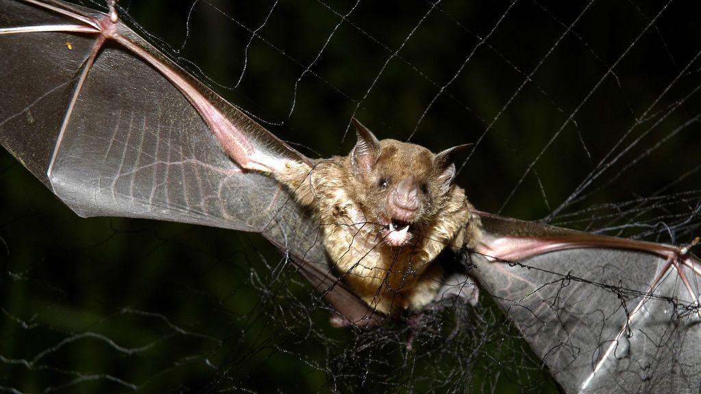 Piden año y medio de cárcel y 135.000 euros de indemnización por matar murciélagos a dos empleados de mantenimiento