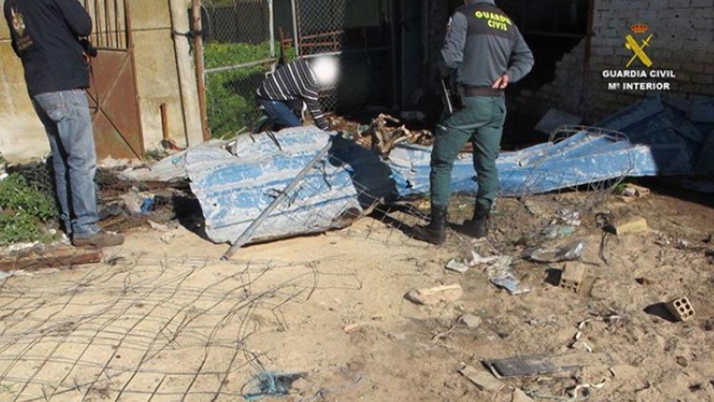 Hallan dos caballos muertos y otros en precario estado en una finca en Bormujos