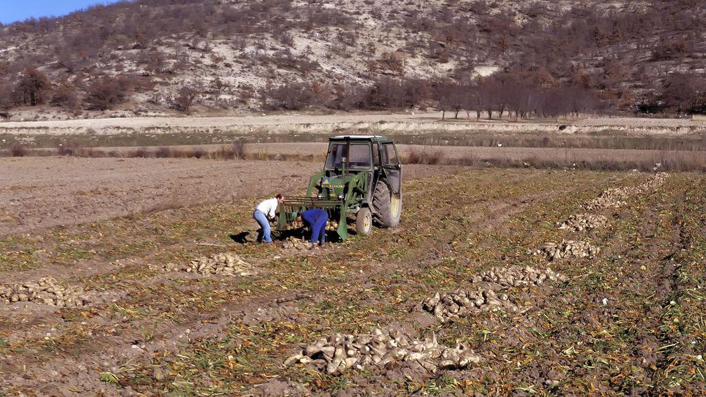Muere una trabajadora atrapada por una máquina de recogida de patatas en Sevilla