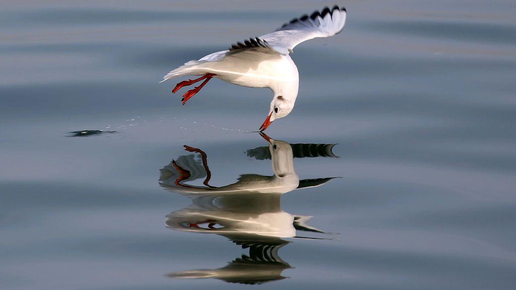Una gaviota sobre el agua del Líbano