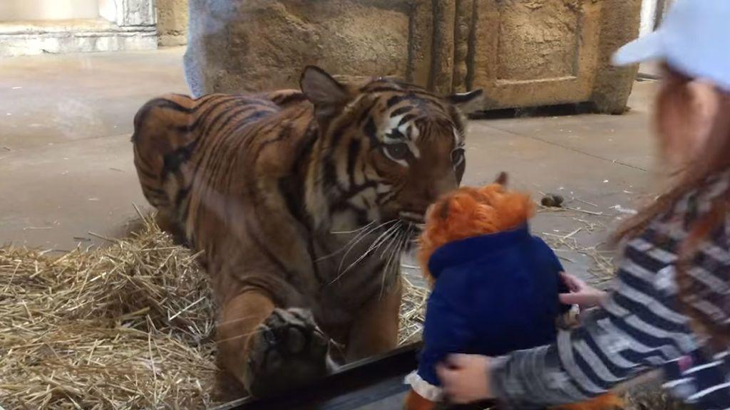 El tigre que se quería comer un peluche