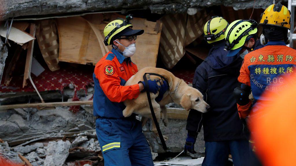 Los rescatistas salvan a un perro desde el interior de un hotel dañado en Hualien, Taiwán