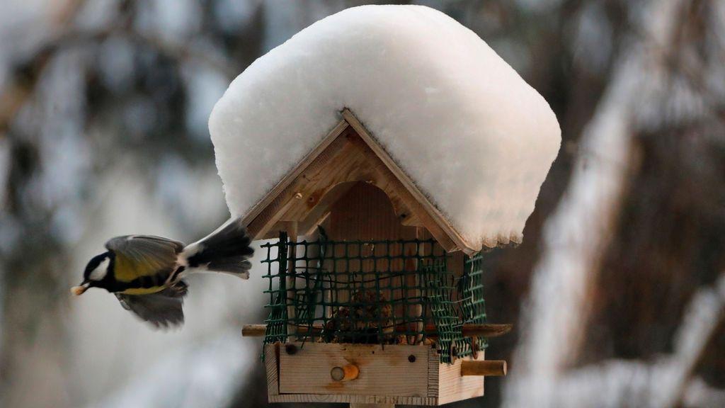 Un pájaro vuela de un comedero cubierto de nieve en París