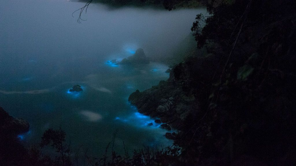 El fitoplancton bioluminiscente se ve a lo largo de las aguas costeras en Big Sur, California