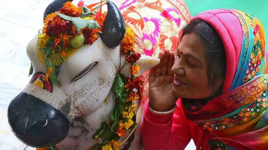 Una mujer hindú susurra sus deseos al oído de Nandi (monte del Señor Shiva) dentro de un templo durante el festival Maha Shivratri en Chandigarh, India