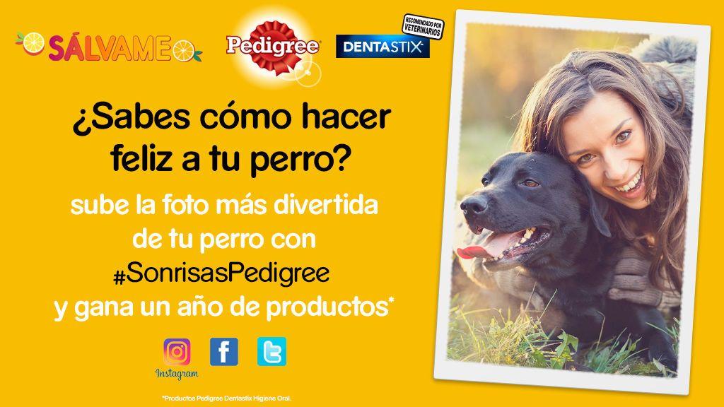¡Participa en nuestro concurso con Pedigree y gana un año de productos!