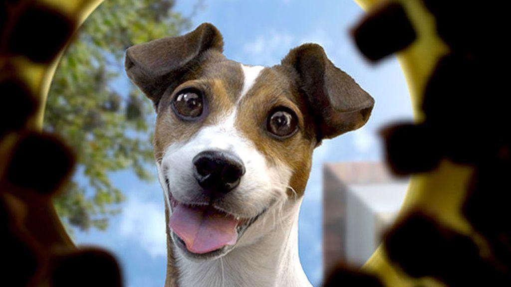 ¡Te enseñamos las claves para que la relación con tu perro sea más especial aún!