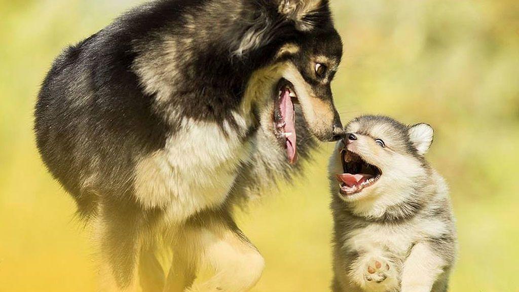 La higiene dental de tu perro, algo más importante de lo que nos pensamos