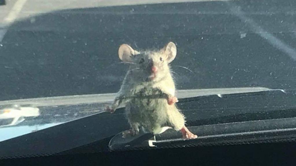 Ratón viajero