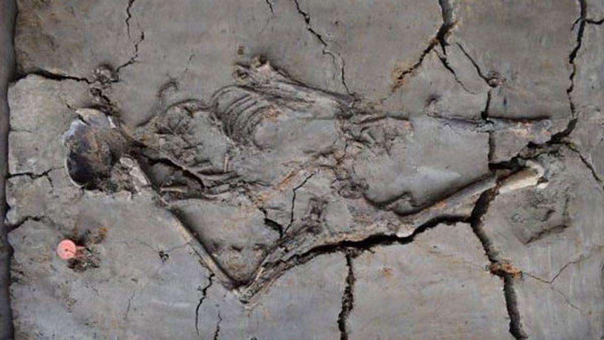 Hallan restos de un bebé de 6.000 años de antigüedad en Holanda