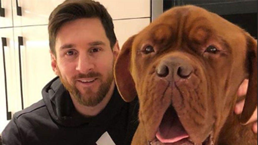 Hulk, el perro de Leo Messi que ya es casi más grande que él