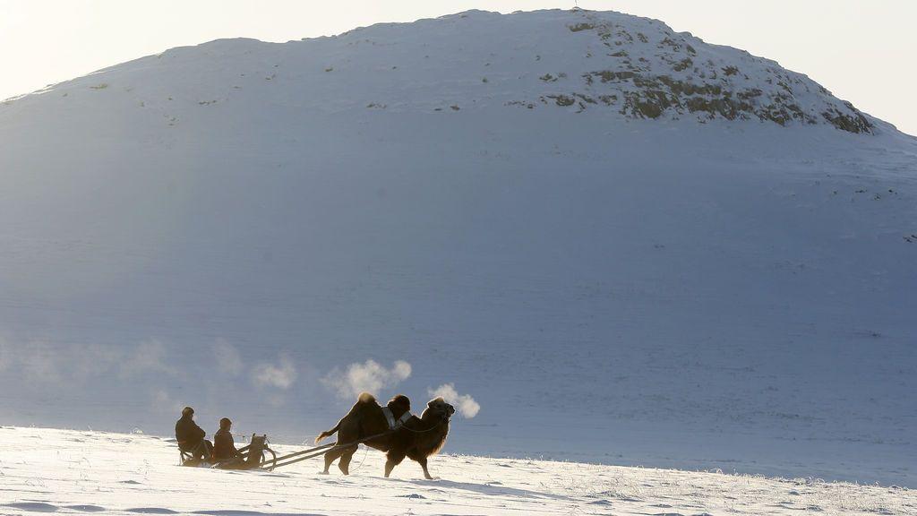 Varios pastores viajan en trineo con un camello por el sur  de la ciudad de Kyzyl, al sur de Siberia