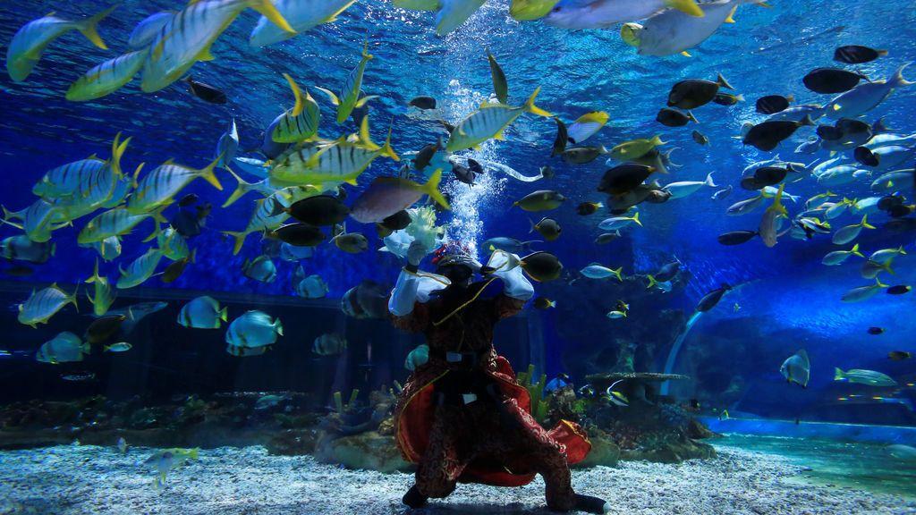 Un buceador nada en un acuario como parte de su espectáculo celebrando el Año Nuevo chino en Manila Ocean Park (MOP), Filipinas