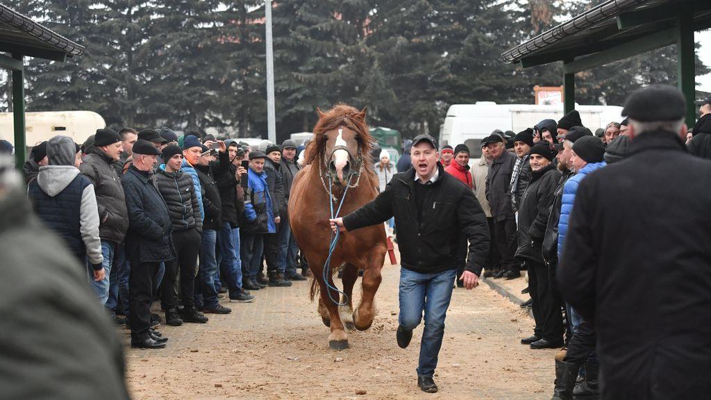 Caballos en el mercado de caballos de Skaryszew, en Skaryszew, Polonia