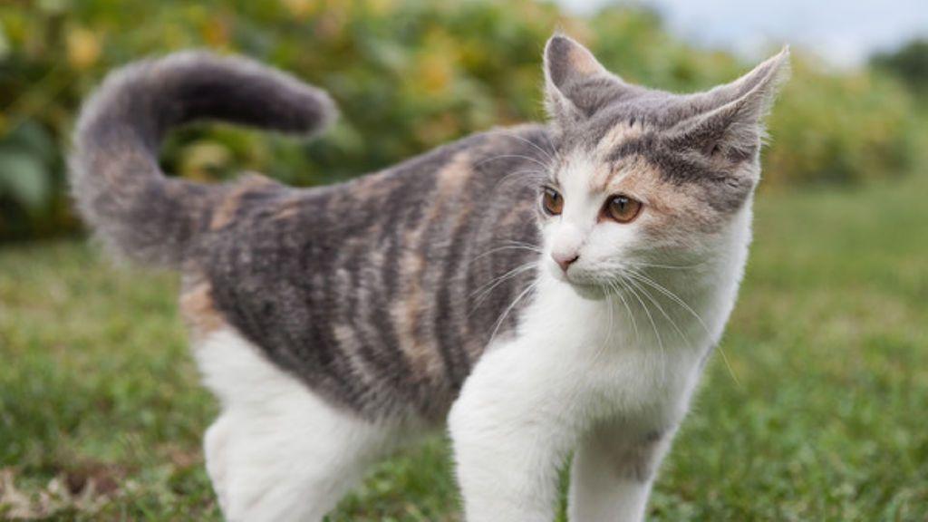Los nueve mejores vídeos de gatos para celebrar el #DíaInternacionalDelGato