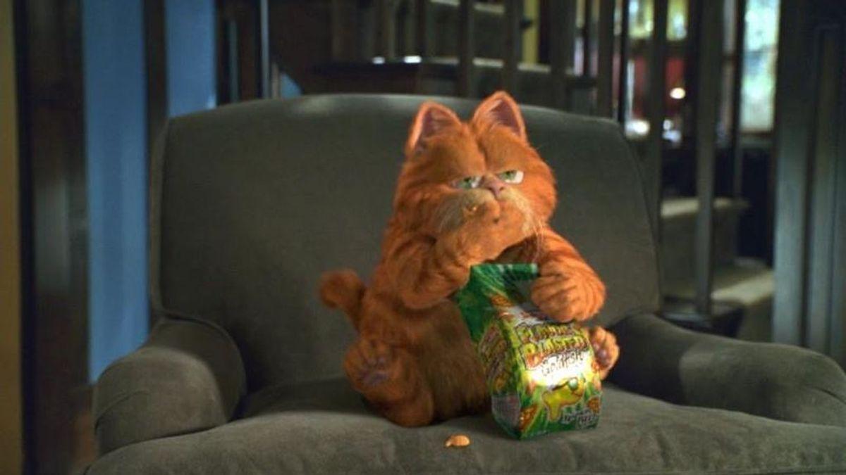 Los mejores gatos cabreados para celebrar el Día Internacional del Gato