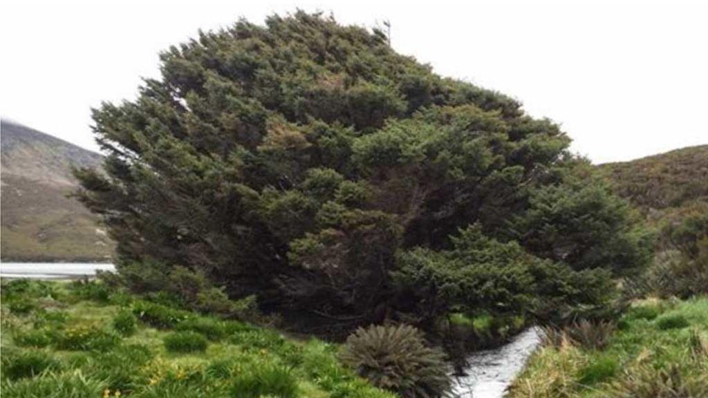 'El árbol más solitario del mundo' tiene las pruebas de la nueva era