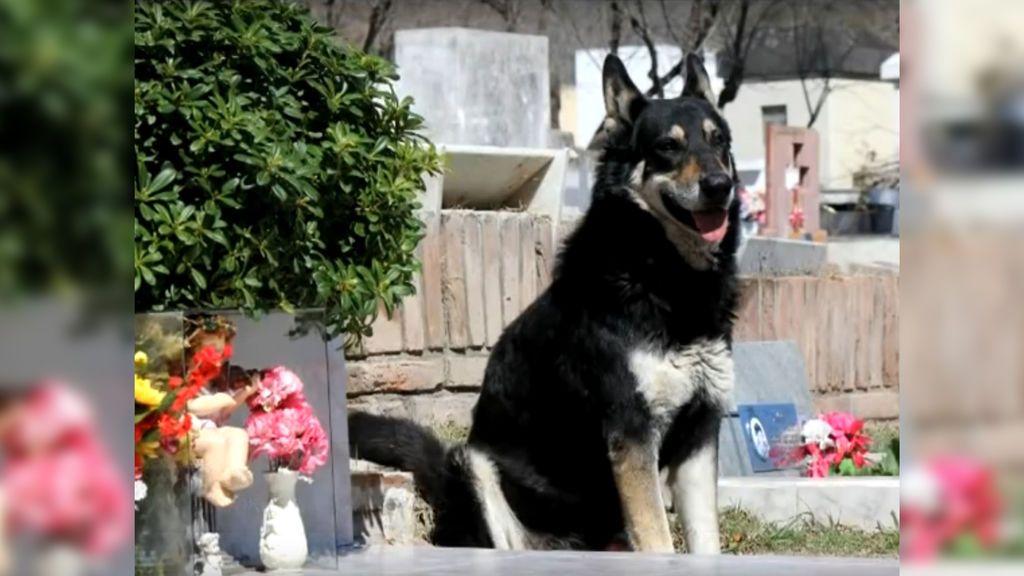 Muere 'Capitán', el perro que desde 2007 visitaba a diario la tumba de su dueño